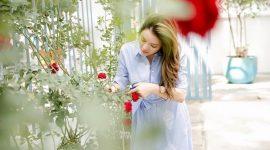 Tự tay Lý Nhã Kỳ tỉa hoa hồng